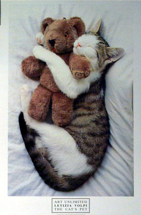 http://www.thehypertexts.com/Mysterious_Ways/Images/Mysterious_Ways_Cat_with_Teddy_Bear.jpg